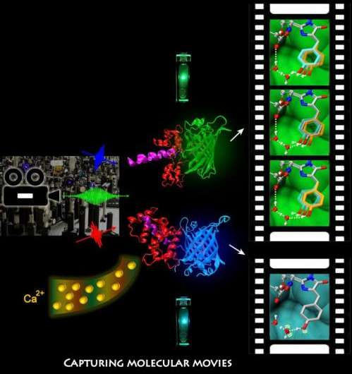 'Molecular movies' will enable extraordinary gains in bioimaging, health research