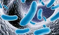 Mouth bacteria invade the gut in liver cirrhosis patients
