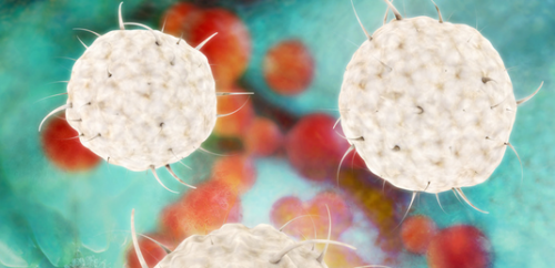Mutation disables innate immune system