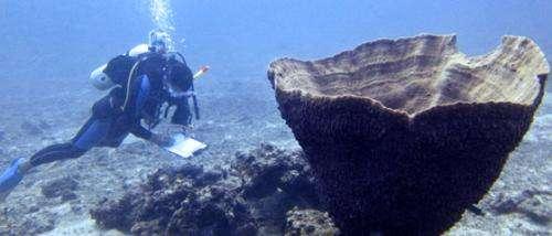 Myanmar research reveals underwater treasures