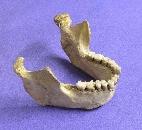 Humans, Neanderthals shared Europe for millennia: study