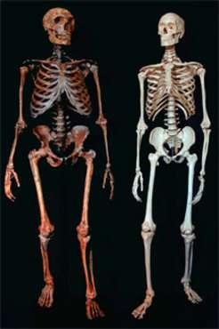 Neanderthal variants in genes involved in lipid catabolism