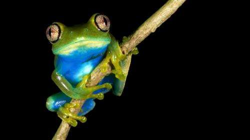Near-extinct African amphibians 'invisible' under climate change