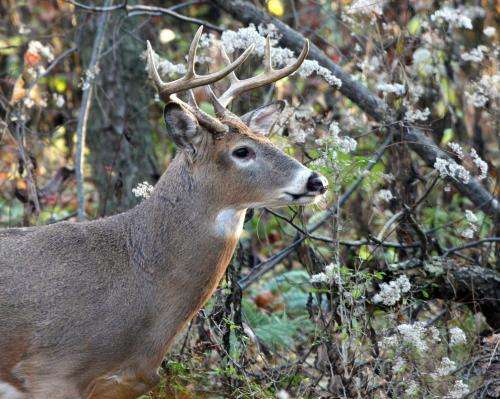 Never-before-seen insights into deer movement offered on research website