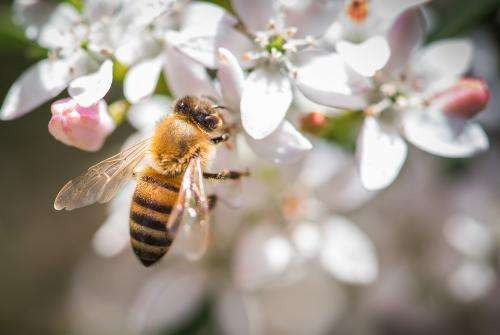 New app offers relief for hay fever sufferers