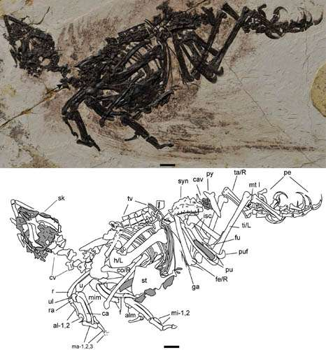 New Enantiornithine bird with scansorial adaptations discovered from the Lower Cretaceous of China