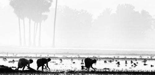 New evidence of suicide epidemic among India's 'marginalized' farmers