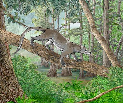 New fossils shed light on the origins of lions, and tigers, and bears (oh my!)