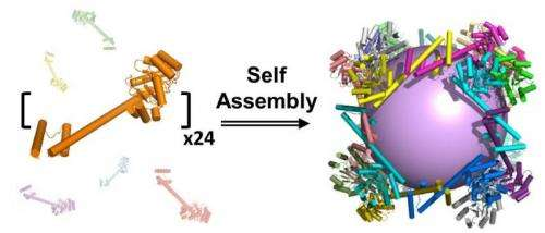 New nanoscale protein container could lead to synthetic vaccines and medicine delivery method