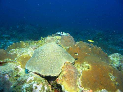 New study of largely unstudied mesophotic coral reef geology