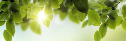 New study shows OPR protein function is important for efficient photosynthesis