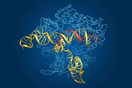 New way to turn genes on