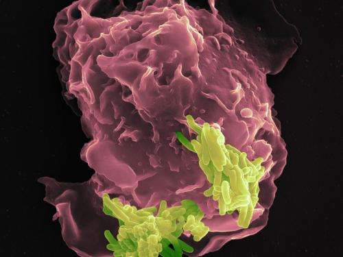 New weapon of the immune system discovered