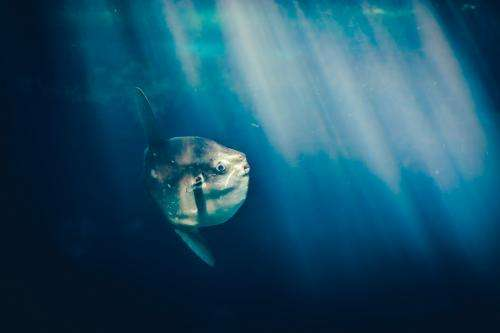 Ninety-five per cent of world's fish hide in mesopelagic zone