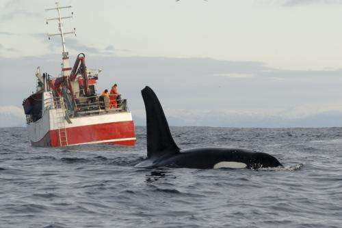Noisy oceans potentially driving whales away from prime habitat
