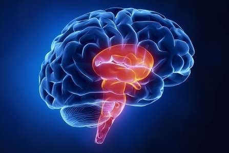 No sedative necessary: Scientists discover new 'sleep node' in the brain