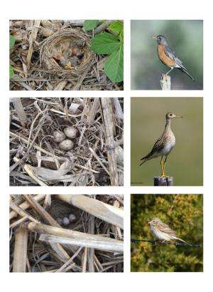 No-till soybean fields give (even some rare) birds a foothold in Illinois