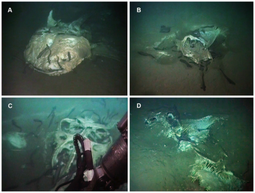 Oil searchers discover and record deep-sea graveyard off Angola coast