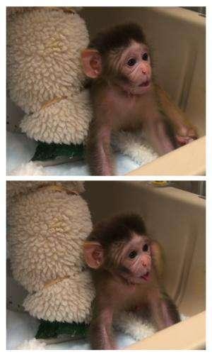 Oxytocin promotes social behavior in infant rhesus monkeys