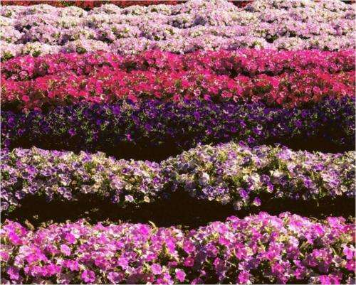An innovative way to increase the flowers, seed and fruits production