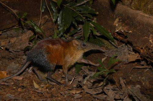 The discovery of 27 vertebrates fully reveals the unmatched biodiversity in Tanzania