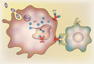 Pinpointing an immune-response trigger