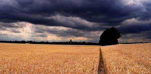 Plant scientists call for rethink of GM crop regulation