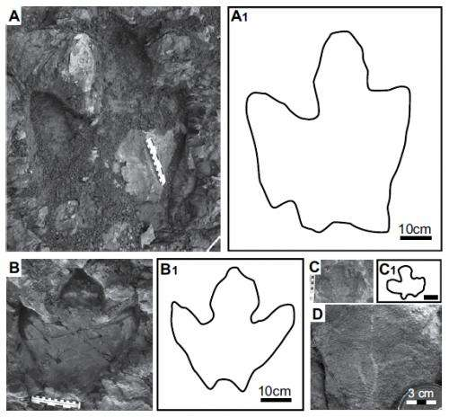 Preserved tracks in Alaska park suggest duck-billed dinosaurs lived in Arctic year-round