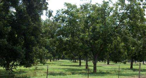 Pros and cons of Texas fruit production entices growers meeting in College Station