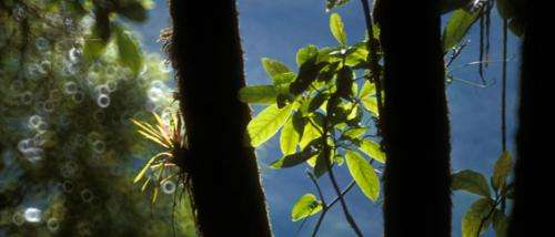 Protecting biodiversity could be key to keeping forests standing in the long term