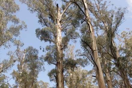 Protecting native forests more valuable than logging