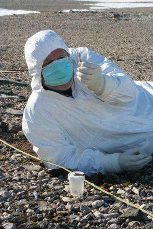 New DNA study unravels the settlement history of the New World Arctic