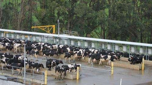 Rain shortfall pushes farm diversification