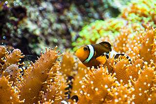 Reef fish arrived in two waves