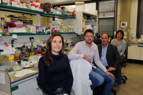 Reelin protein rescues cognitive deficits in an animal model of Alzheimer's disease