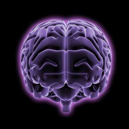 Research lays foundations for brain damage study