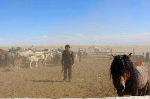 Reshaping the horse through millennia