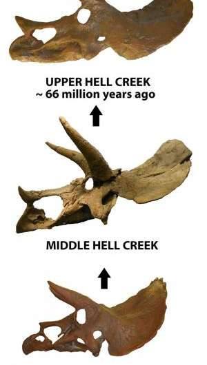 New insights about evolving Triceratops in Montana's Hell Creek Formation