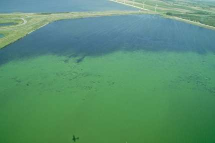 Rising CO2 levels will intensify algal blooms across the globe