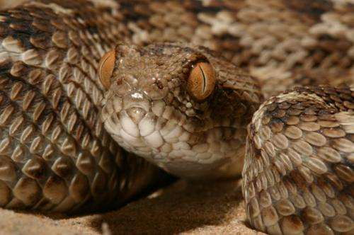 Study looks at venom variation in closely related snake species