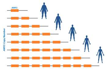 Saliva provides a new trail in obesity genetics