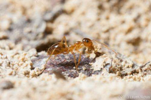 Science and cookies: Researchers tap into citizen science to shed light on ant diversity