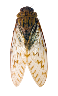 Scientific collaborative publishes landmark study on the evolution of insects