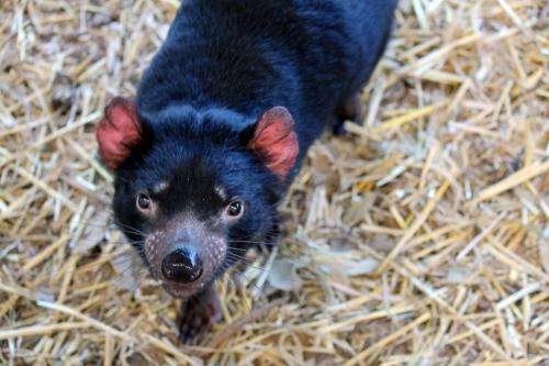 Scientists warn: Conservation work in zoos is too random