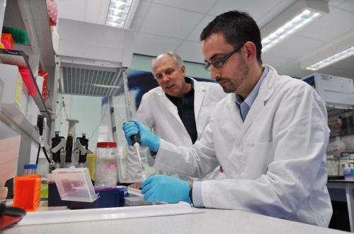 Self-repairing mechanism can help to preserve brain function in neurodegenerative diseases