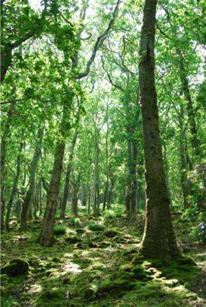 Should the role of afforestation in climate change mitigation policy be re-evaluated?