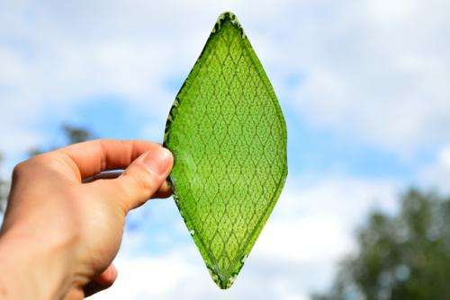 Silk leaf maker says material could aid space journeys (w/ Video)