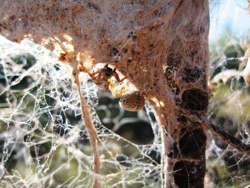 Size, personality matter in how Kalahari social spiders perform tasks