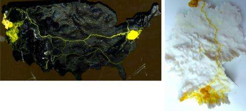 What can slime molds offer computing?
