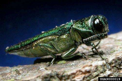 Slowing the insect invasion: Wood packaging sanitation yields US $11.7 billion net benefit